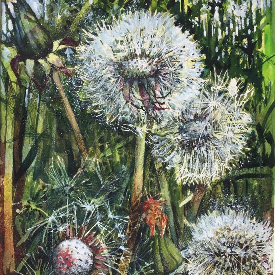 Picture of Dandelion 1