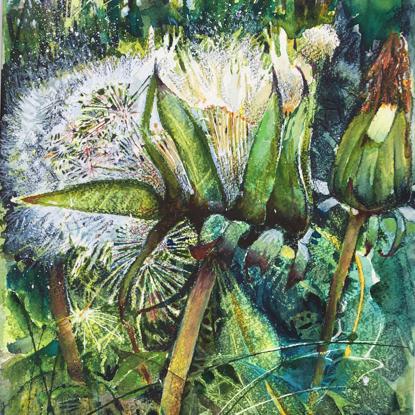 Picture of Dandelion Print 1