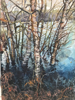 Picture of Beech Trees in water